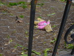 This was on Culvert in Adams-Morgan. Some abandoned stuffed animals in the yard of a townhouse. They were gone the next day.